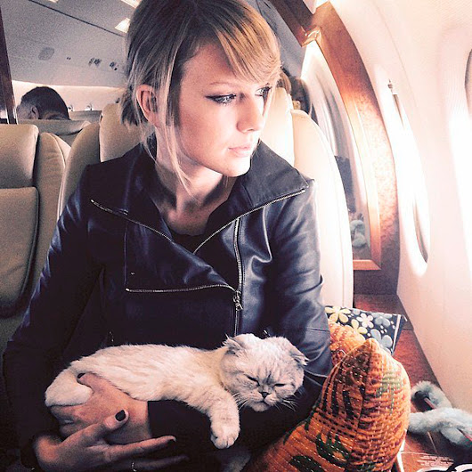 the coolest cat breeds according to the a-list