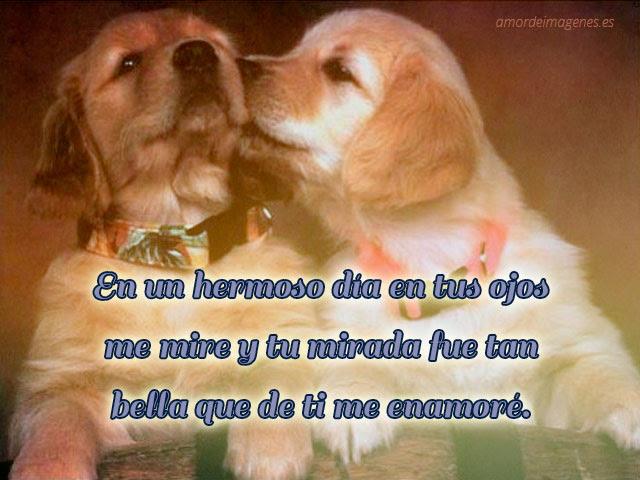 Frases Lindas De Amor Gratis Para Descargar Zeno News