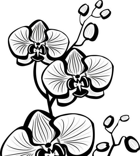 Anggrek Putih Kecil godean.web.id