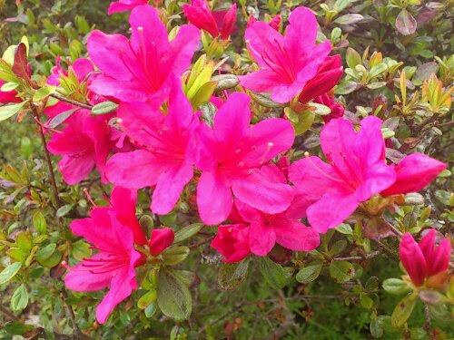 5月の花 花見山公園