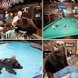 We can't BEAR to be apart: Animal handler and his wife enjoy trips to the pub, afternoon picnics and swimming with 18-month-old grizzly Billy... and he even watches TV in the lounge