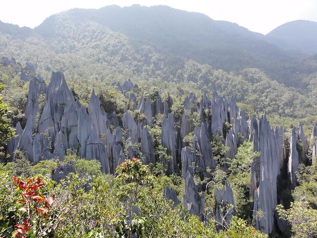 Pinnacles @ Mulu national park