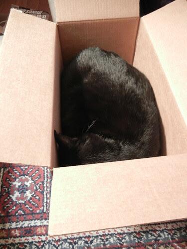 Cat in a Box 8664