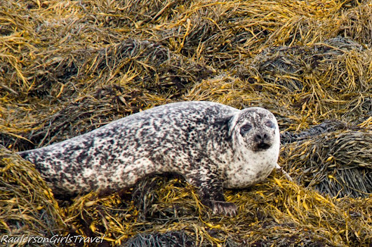 Desperately Seeking Seals on the Seafari Cruise: Kenmare, Ireland | RaulersonGirlsTravel