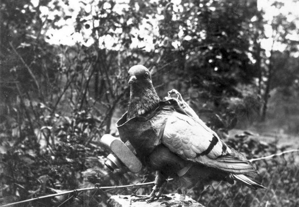 Os animais também lutaram na Primeira Guerra Mundial 05