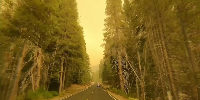 Fire crews keep up drive to protect sequoias