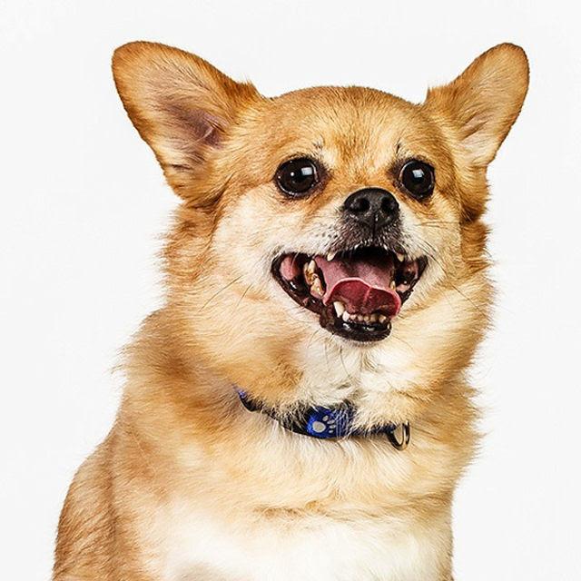 Retratos de cães cheios de personalidade 18