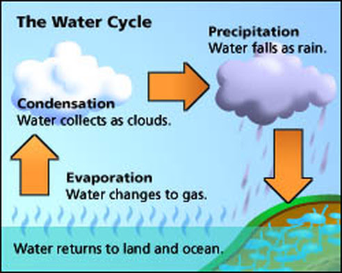 The Water Cycle Year 7 Geography