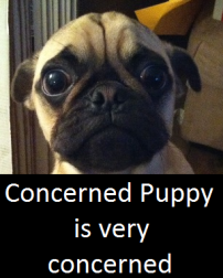 Concerned puppy is very concerned