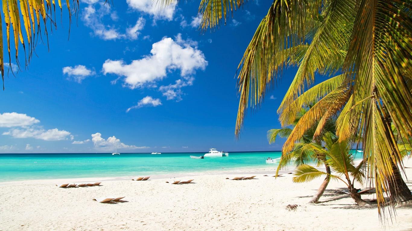 Caribbean Beach Palm Tree Wallpaper Download Hd Wallpapers Photos