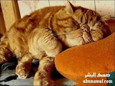 صور : فاهم اللقمة غلط + يوم النوم العالمي .. والمزيد