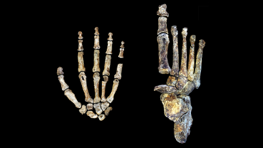Newly-Discovered, Ancient Humans Were Tree-Climbers Who Walked and Used Tools