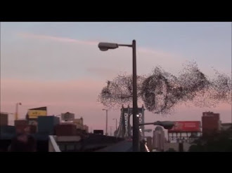 Thousands of birds flying over New York formed Putin's face / Miles de Pájaros forman la Cara de Putin?