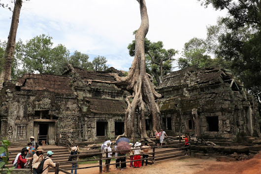 The Giant Strangler Trees at Cambodian Temples - i Share