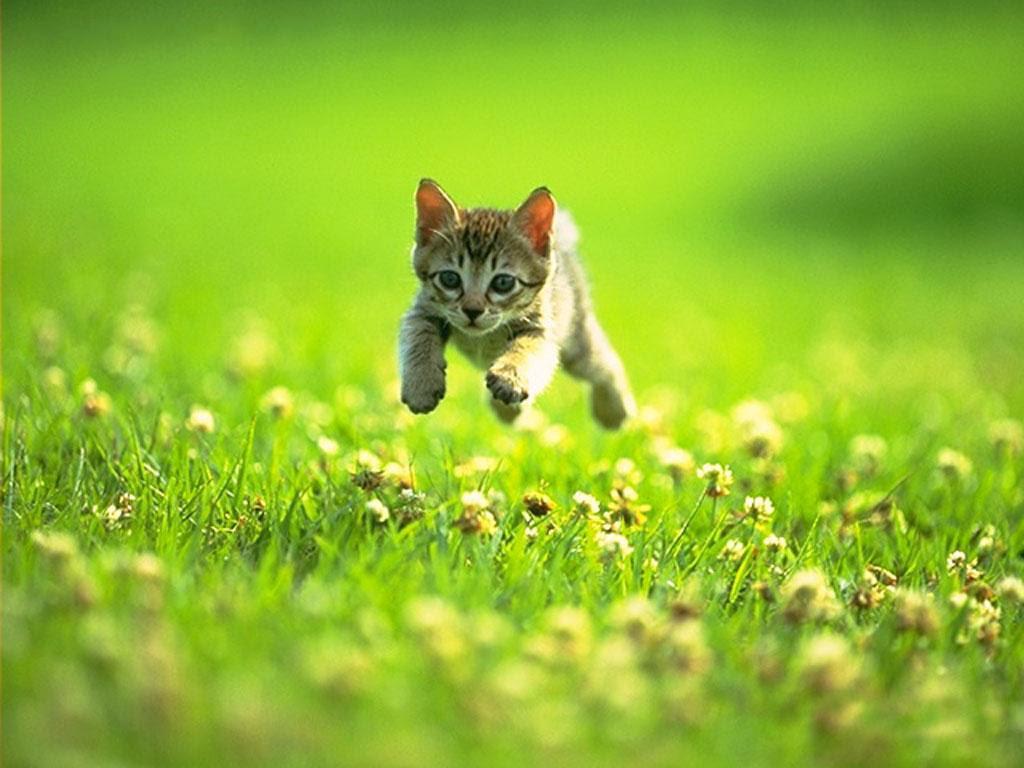 cute kitty prancing through a field
