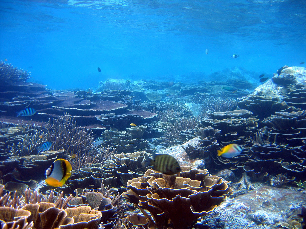 Reef flat with branching (Acropora sp.) and plate coral. Batu Mak Cantik, Redang Island, Terengganu, Malaysia. Photo by Yusri Yusuf, 2003
