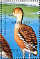Fulvous Whistling Duck Dendrocygna bicolor