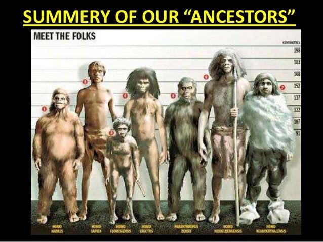 Resultado de imagem para homo erectus
