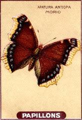 papill 16