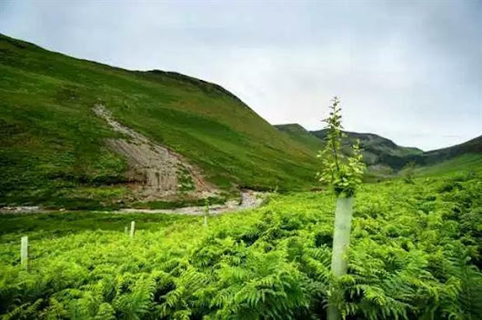 "National Trust mass tree planting in Lake District ""for flood resilience"""