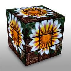 Gazinia Cube