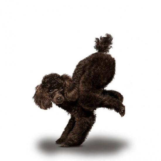 Ημερολόγιο με σκυλιά που κάνουν Yoga