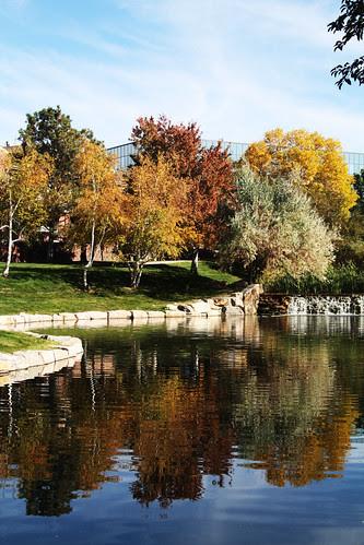 pond reflection-dvr pw