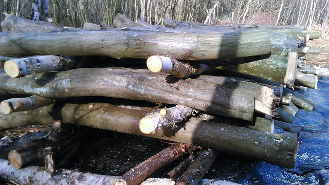 Stacked logs 2014-03-22 15.27.25