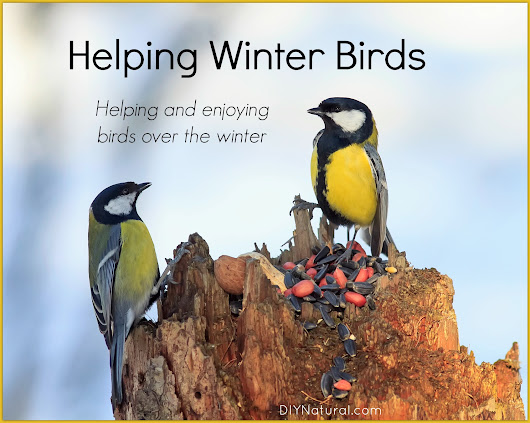 Winter Birds: Surprising Ways to Help Local Birds Over Winter