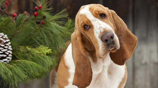 Here's How To Get a Great Photo of Your Dog This Christmas