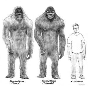 perbandingan antara manusia dengan bigfoot
