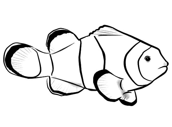 Clown Fish with Bubbles Coloring Pages | Best Place to Color