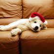 3 Reasons Why Puppies Make Awful Christmas Gifts.....