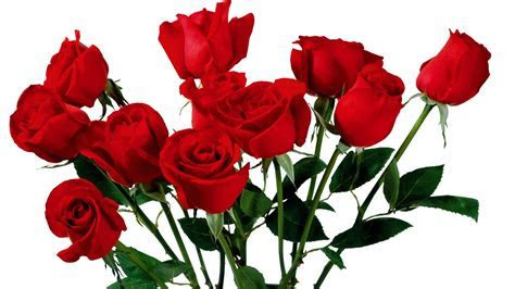 Roses flower most beautiful pure HD wallpaper   HD