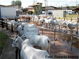 35ª Expofeira de São Lourenço supera expectativas