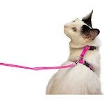 Juvale Cat Harness and Leash - Small Pet Leash with Adjustable Nylon Kitty Strap Collar 4.5 Inches, for Cats and Small Dogs - 55 Inches Long - Pink