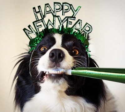 New Year's Resolutions for You and Your Pet | Barking Life Pet Concierge