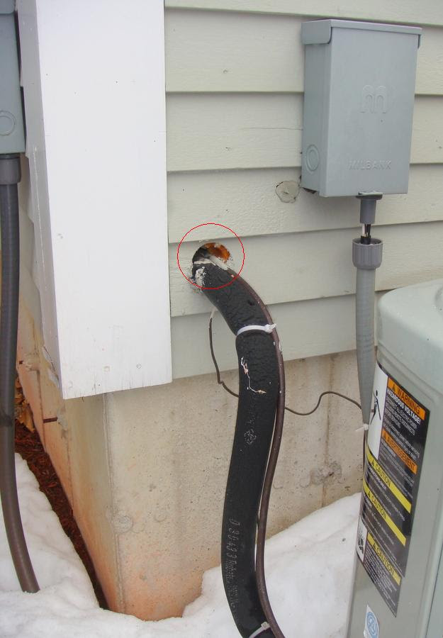 Mouse Removal in Massachusetts - Mouse Pest Control, Prevention ...