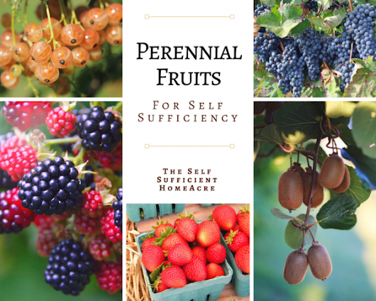 Perennial Fruits for Self Sufficiency - The Self Sufficient HomeAcre
