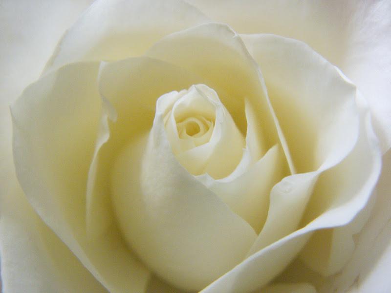 De quoi la nuit rêvent les roses?