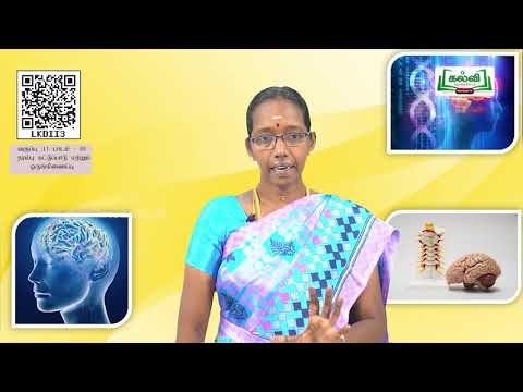 11th Zoology நரம்பு கட்டுப்பாடு மற்றும் ஒருங்கிணைப்பு அலகு 10 பகுதி 1 Kalvi TV
