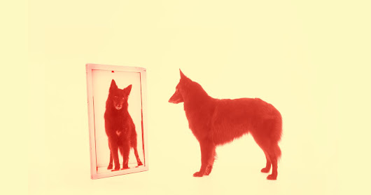 What Does a Dog See in a Mirror?