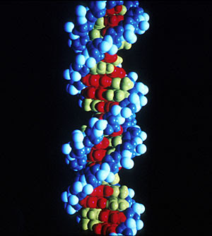 Estructura del ADN. (Robert Guy | Instituto Nacional del Cáncer de EEUU)