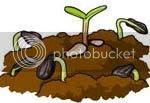 benih dan tanah