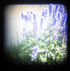 ttv garden1