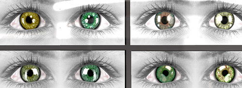 50L Weekend Fever Kiwi eyes