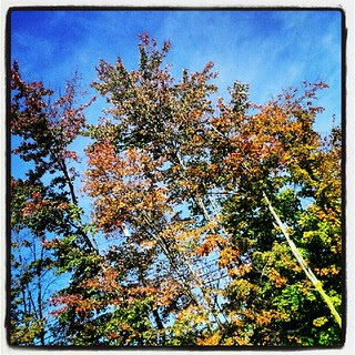 #newhampshire #fall #foliage #tree #leaves #sky #happy #beautiful #love #picoftheday