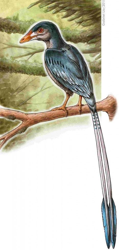 Concepção artística mostra como seria a ave encontrada fossilizada (Foto: Gabriel Lio/Nature Communications)