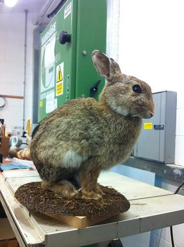 Rabbit base