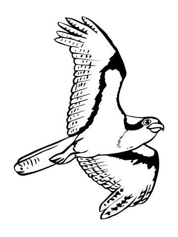 Dibujo De águila Pescadora Planeando Para Colorear Dibujos Para